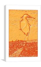 Wading Heron, Canvas Print