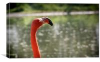Pink Flamingo with the sun in the face, Canvas Print