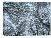 Snow-filled Skywards View