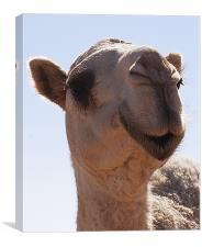 camel, Canvas Print