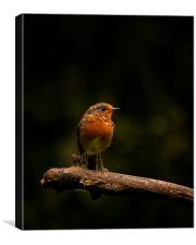 Robin, Canvas Print