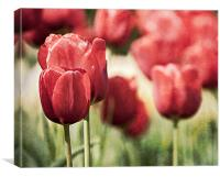 Tulips in the Park, Canvas Print