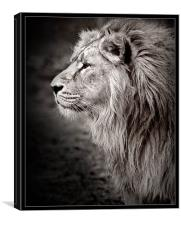 Majestic, Canvas Print