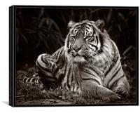 Tiger Mono, Canvas Print