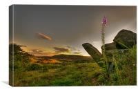 Foxgloves above Uppermill, Canvas Print