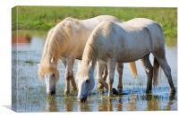White horses, Canvas Print
