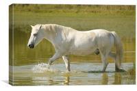 White horse, Canvas Print