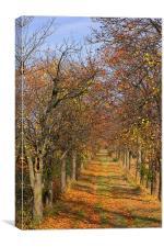 Fall, Canvas Print