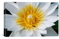 Wasp on a flower, Canvas Print
