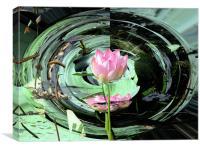 Lotus, Canvas Print