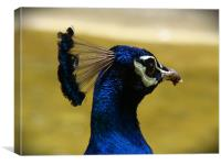 peacock head, Canvas Print