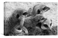 Meerkat Family, Canvas Print