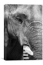 Elephant Portrait, Canvas Print