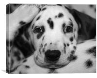 bed time puppy, Canvas Print