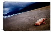 Pig on the beach, Canvas Print