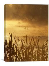 Morning Light, Canvas Print