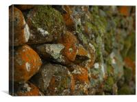 Lichen Covered Wall, Canvas Print