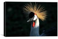 Crowned Crane, Canvas Print