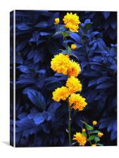 Blue Bush , Canvas Print