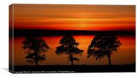 sunset over 3 trees, Canvas Print