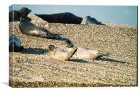 Seals on a Norfolk beach