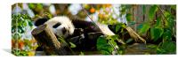 Sleepy Panda, Canvas Print