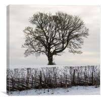 Tree in Snow, Canvas Print