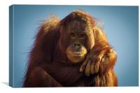 Orangutan Smile, Canvas Print