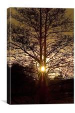 Glorious Tree, Sunset, Foulridge, Lancashire, Canvas Print