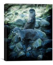 Scottish Otters, Canvas Print