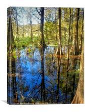 Corkscrew Swamp Florida, Canvas Print