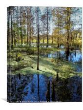 Corkscrew Swamp, Canvas Print