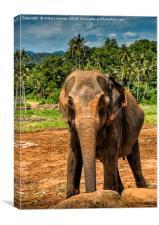 The Elephants Sanctuary, Canvas Print