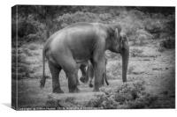 Sri Lankan Elephant Family, Canvas Print