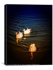 3 white ducks, Canvas Print
