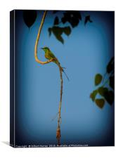 Indian Bee Eater, Canvas Print