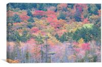 Fall Colors In Acadia National Park