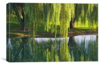 Willow Trees, Lancaster Pennsylvania, Canvas Print
