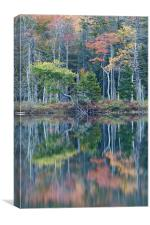 Reflection, Maine, Canvas Print