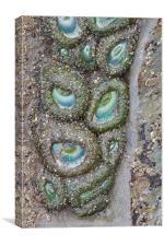 Anemone Eyes