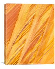 Navajo Sandstone, Coyote Buttes Utah, Canvas Print