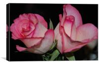 Two Pink Roses, Canvas Print