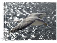 Seabird, Canvas Print