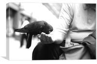 pigeons2, Canvas Print