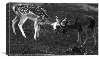 Young Bucks, Canvas Print