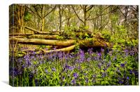 In The Depths of Bluebell Wood, Jubilee woods, Canvas Print