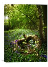Bluebell Glade, Canvas Print
