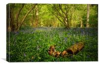 Bluebells in a  Leicestershire Woodland