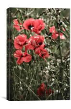 Poppy Patch, Canvas Print