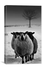 Wyrd Sisters,Farm animals, Canvas Print